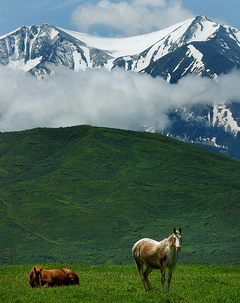 Horses and Mt. Sopris