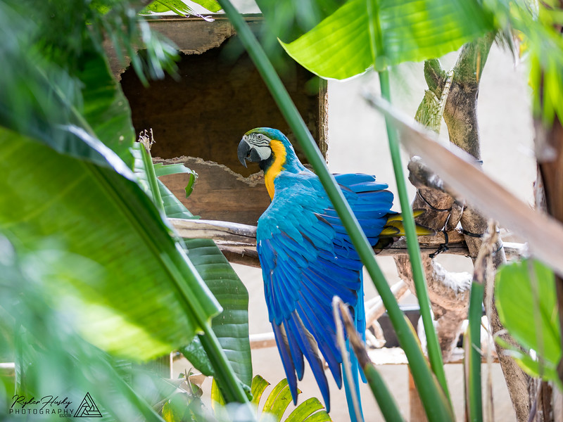 Santa Barbara Zoo 10-13-2018-094.jpg