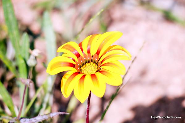 Flowers in Janurary