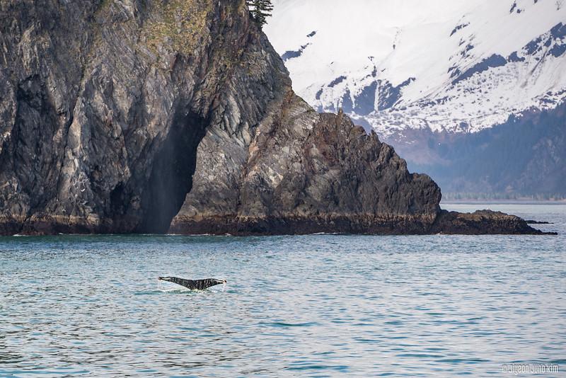 Kenai Fjords 360 Inaugural Cruise-6108323-Juno Kim.jpg
