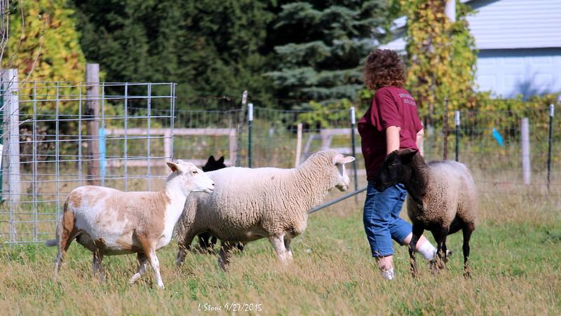 2015.9.27 Herding at Bonnies (55).JPG