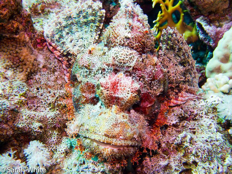 SharmDec-106.jpg