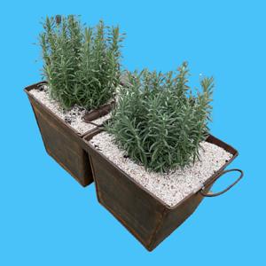 Double Bucket Planter