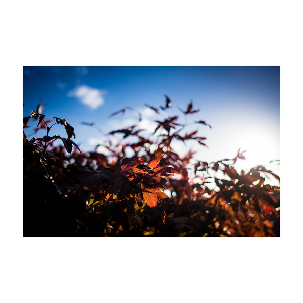 288_Backtree_10x10.jpg