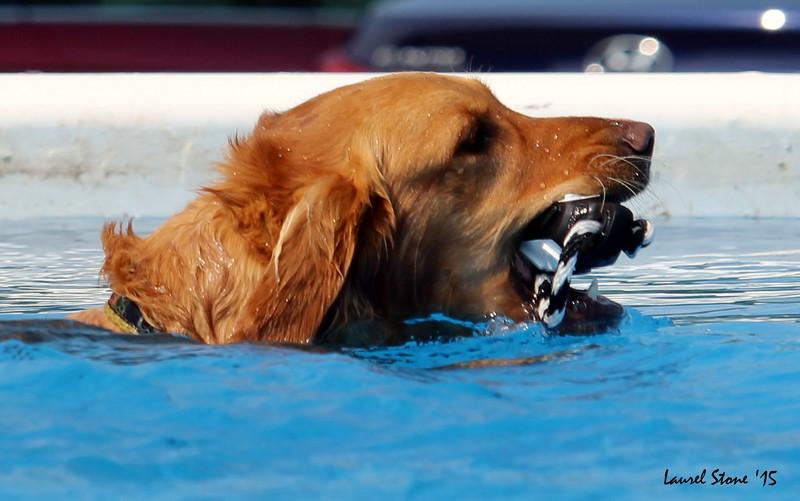 2015.8.21 Dock Dogs Lambeau-034.JPG