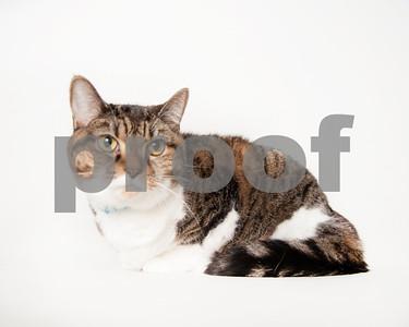 2016 February  Cat Gallery