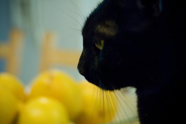 Cats2.jpg