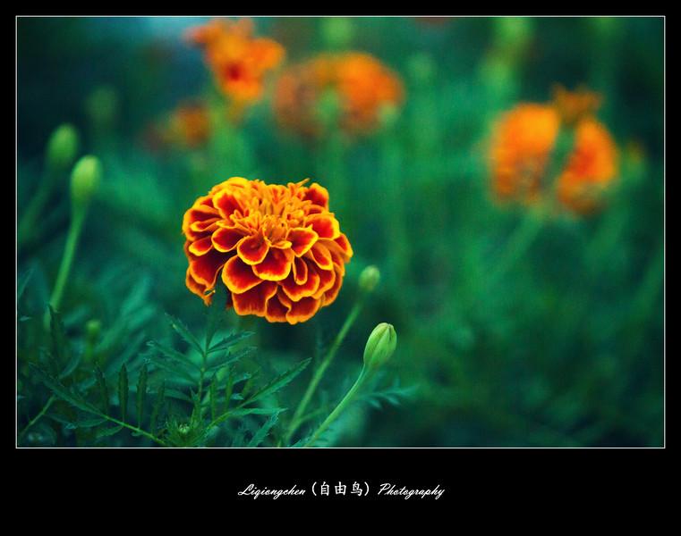 IMG_3312-L.jpg