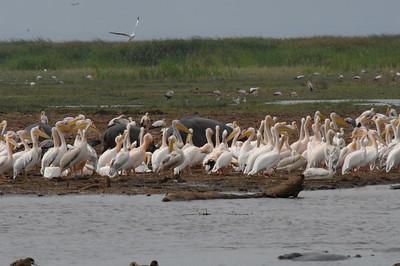 7-6-2008 Lake Manayara Tanzania