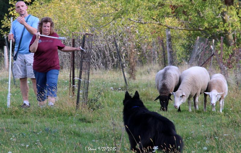 2015.9.27 Herding at Bonnies (64).JPG