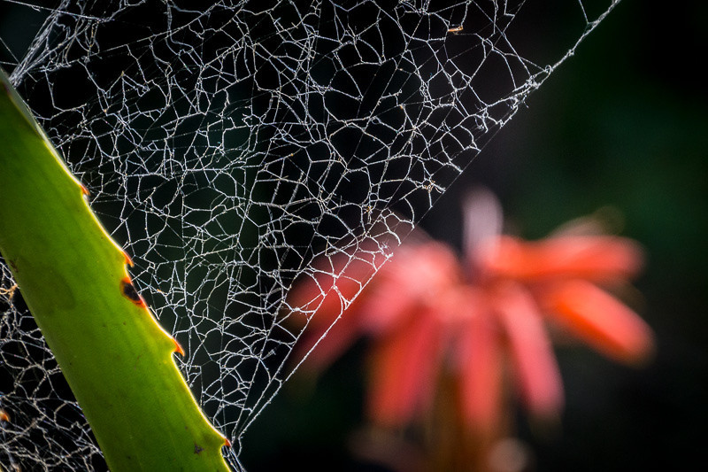 apr 16 - spider web.jpg