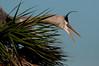 Best Birds 2014-6789