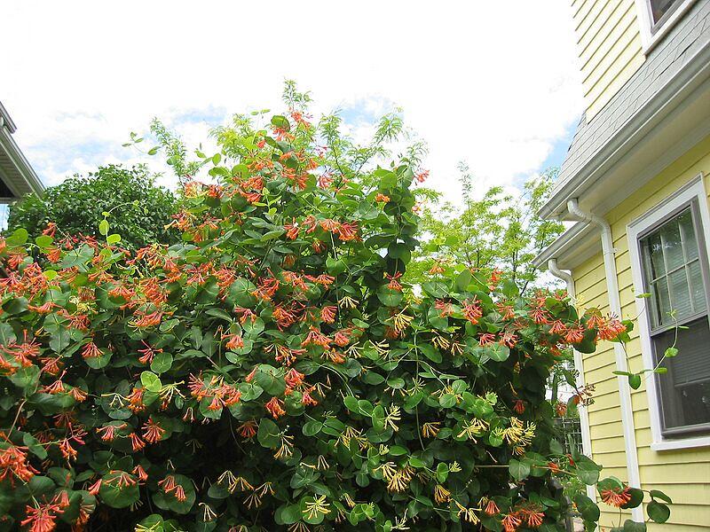 garden-2003-06-0169_std.jpg