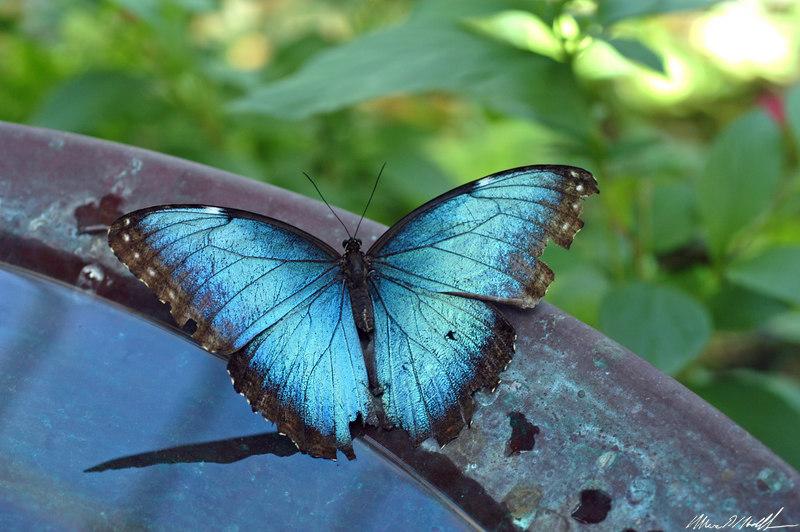 2006 Key West Butterflies DSC_0215.jpg