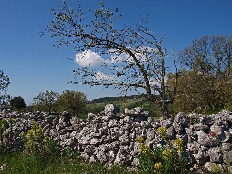 Monte Sacro Mattinata 29-04-10 (24).jpg