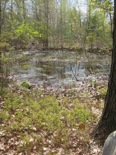 One last look at the vernal pool as we headed back down the trail.