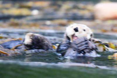 Otters & Seals