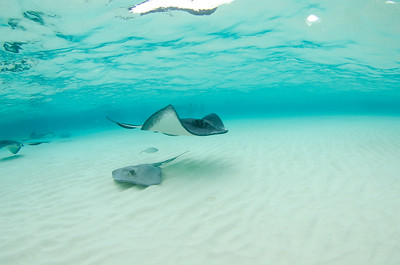 Cayman Islands Stingray and Snrokel (04/20/2019)