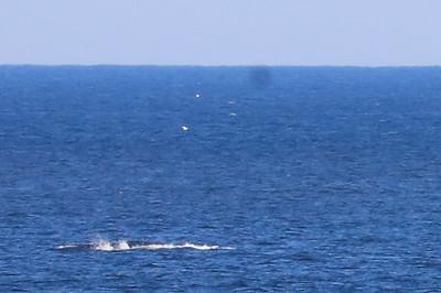 whale 2018