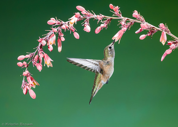 Hummingbirds Only