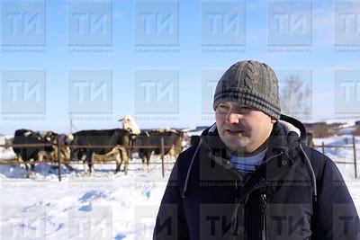 23.03.2018  - Фермер из Арска Алмаз Шарипов держит больше ста голов коров (Салават Камалетдинов)