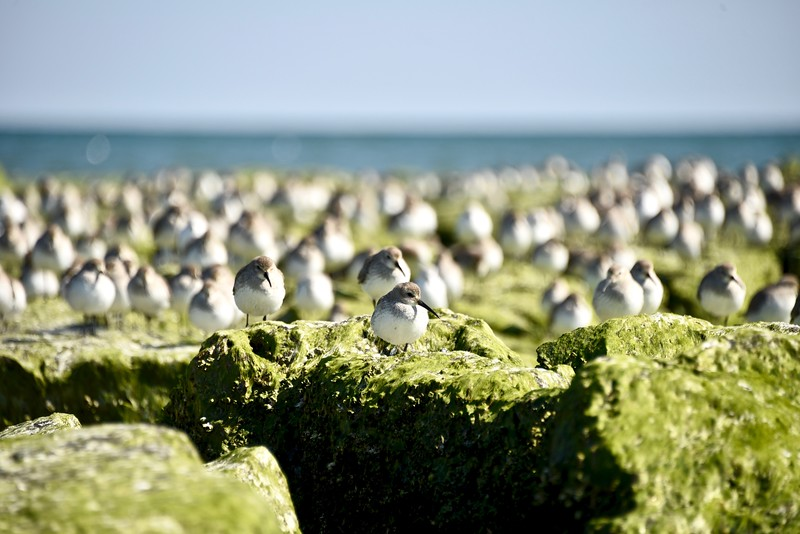Sand Pipers 3:23:19-1 copy.jpg