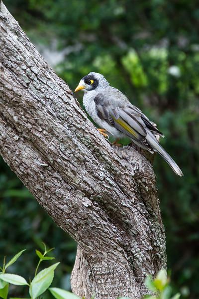 NZ Bird