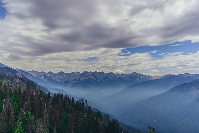 Rui in Sequoia-07078.jpg