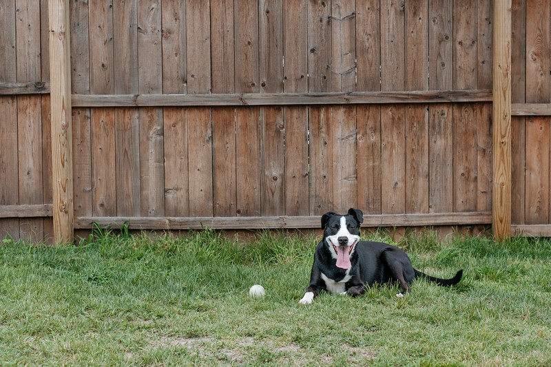 Scarlett Sitting in the Grass with Her Ball