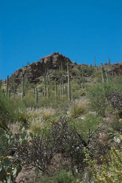 20050429 Sabino Canyon149.jpg