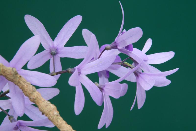 purple wreath sandpaper