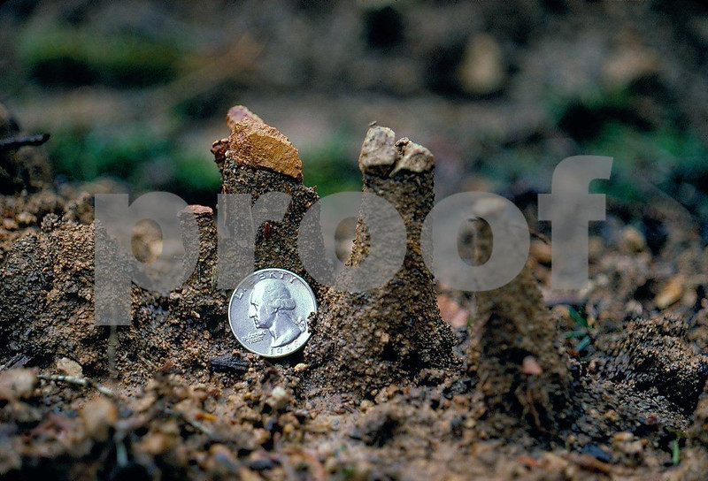 Soil pedistals 43.01.012.jpg