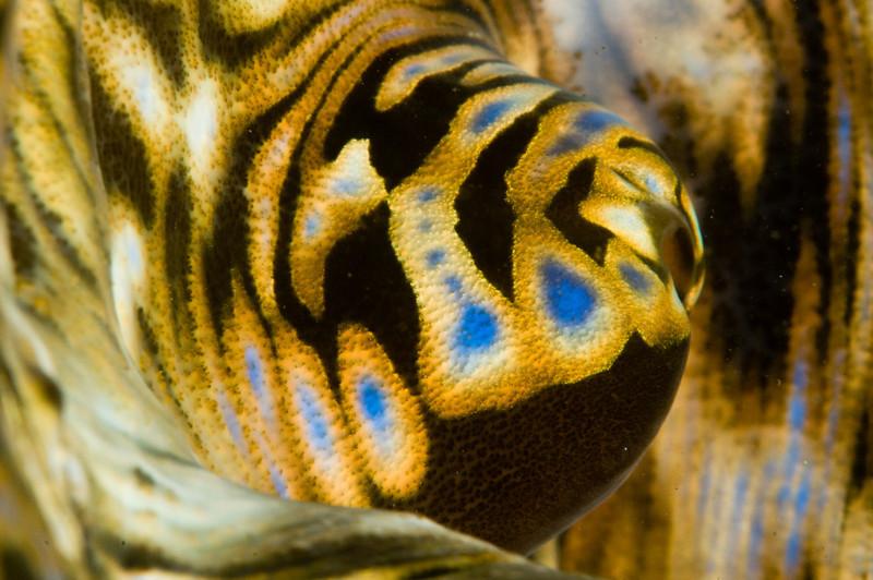 clam-4554.jpg