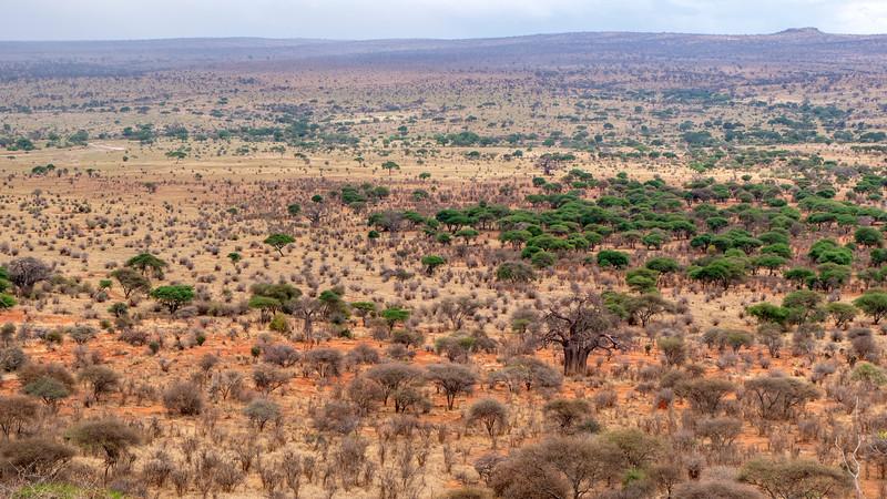 Tanzania-Tarangire-National-Park-Lemala-Mpingo-Ridge-38.jpg