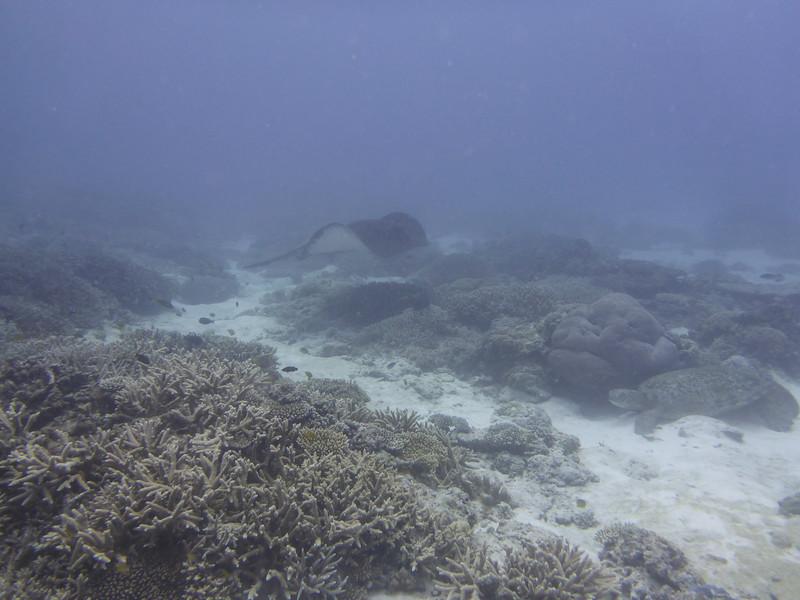 09. Lady Elliott Island-0354.jpg