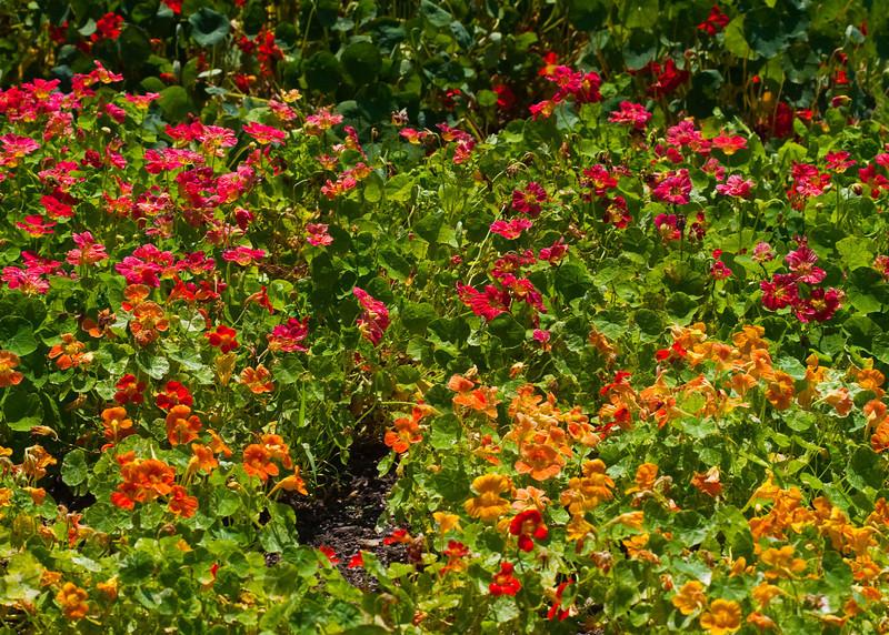 2009 06 30_NY Botanical Gardens_0778_edited-1.jpg