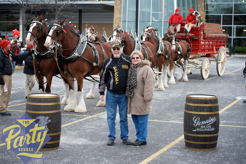Clydesdale Portraits 49.jpg