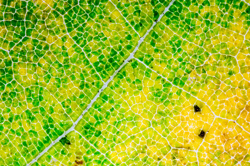 Highly efficient farms of life - as seen from above. Fields of chlorophyll produce sugar and oxygen for all to enjoy. #Farm #Photosyntheis #Plant #Leaf