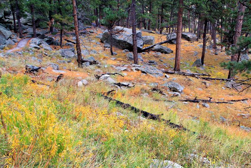 Devils Tower Trail Grass 4.jpg
