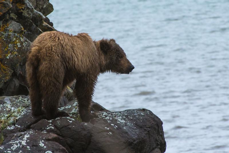 Alaska-9853.jpg