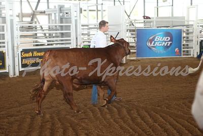 Steer Show 2015