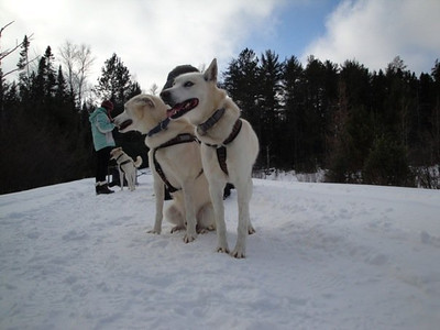 Dogsledding Trip 2010