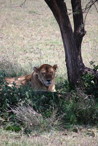 Serengeti (172).JPG