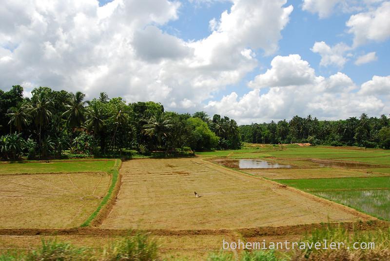 view from train Sri Lanka.jpg