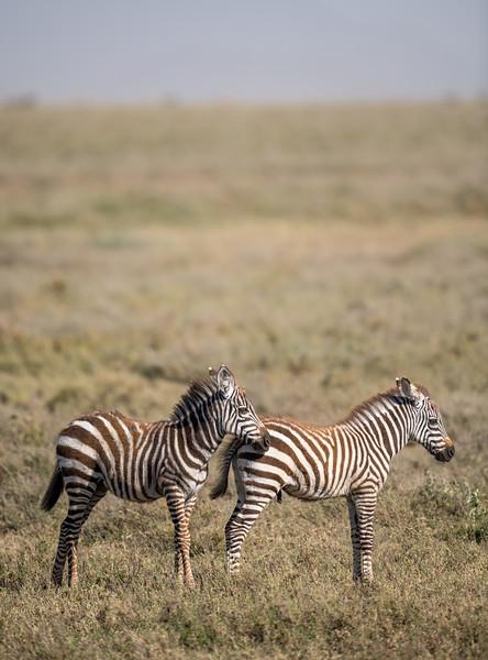 Tanzania_Feb_2018-408.jpg