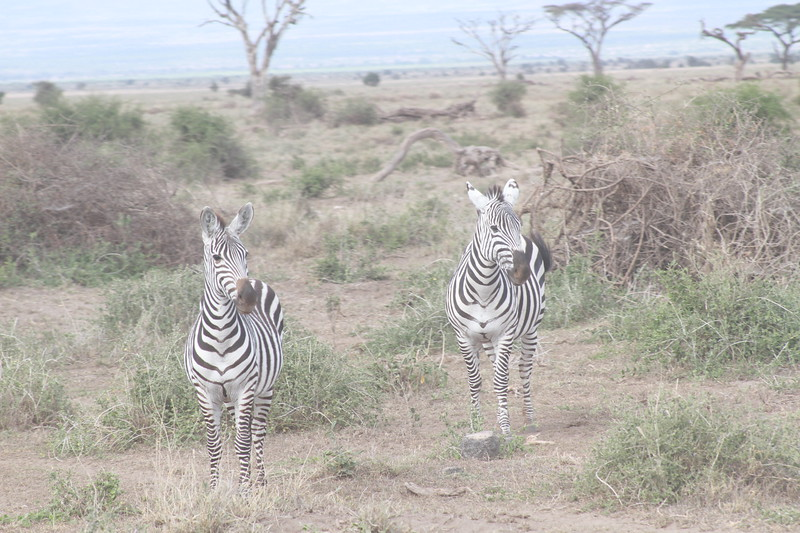 Kenya 2019 #2 706.JPG