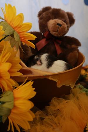 Pet Supply Plus Photo Shoots