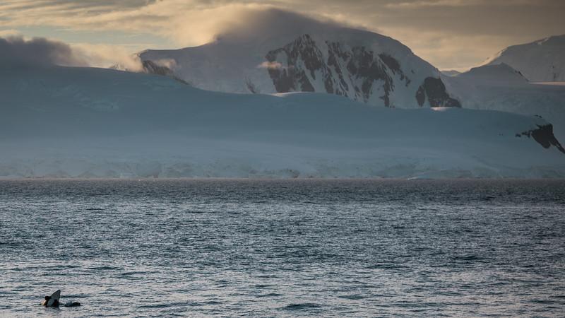 _MG_7728_20170122_Antarctica.jpg