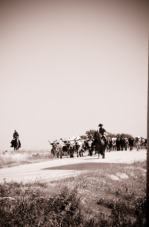 Kansas Cattle Drive 2011