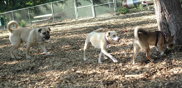 PICS JUNE 17::LUKE, Trixie, Foxi